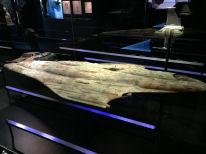 Mon Calamari Cruiser picture No.2